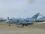 わたくんさんが、芦屋基地で撮影した航空自衛隊 U-125A(Hawker 800)の航空フォト(写真)