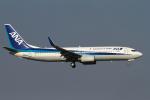 hiko_chunenさんが、成田国際空港で撮影した全日空 737-881の航空フォト(写真)