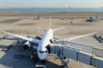 kuxiuxingさんが、羽田空港で撮影した全日空 787-8 Dreamlinerの航空フォト(写真)