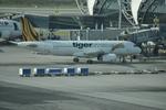 snow_shinさんが、スワンナプーム国際空港で撮影したタイガー・エアウェイズ A320-232の航空フォト(写真)