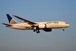 tsubasa0624さんが、成田国際空港で撮影したユナイテッド航空 787-8 Dreamlinerの航空フォト(写真)