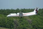 北の熊さんが、新千歳空港で撮影したニューギニア航空 DHC-8-315 Dash 8の航空フォト(写真)