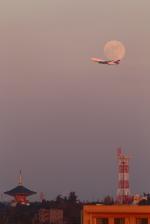 maruさんが、成田国際空港で撮影したデルタ航空 747-451の航空フォト(写真)
