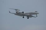 北の熊さんが、新千歳空港で撮影したMEGA WING LLC G-IVの航空フォト(写真)