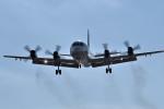 tsubasa0624さんが、下総航空基地で撮影した海上自衛隊 P-3Cの航空フォト(飛行機 写真・画像)