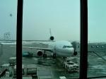 tsubasa0624さんが、新千歳空港で撮影した日本航空 MD-11の航空フォト(飛行機 写真・画像)