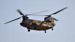 spockerさんが、習志野演習場で撮影した陸上自衛隊 CH-47JAの航空フォト(写真)