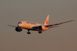 アイスコーヒーさんが、成田国際空港で撮影した日本航空 787-8 Dreamlinerの航空フォト(写真)