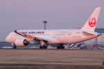 アイスコーヒーさんが、成田国際空港で撮影した日本航空 787-8 Dreamlinerの航空フォト(飛行機 写真・画像)