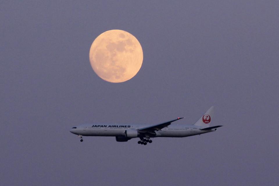 アイスコーヒーさんの日本航空 Boeing 777-300 (-) 航空フォト