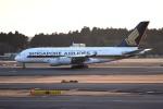 tsubasa0624さんが、成田国際空港で撮影したシンガポール航空 A380-841の航空フォト(写真)