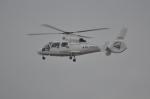 夏みかんさんが、名古屋飛行場で撮影したエアバス・ヘリコプターズ・ジャパン AS365N2 Dauphin 2の航空フォト(飛行機 写真・画像)