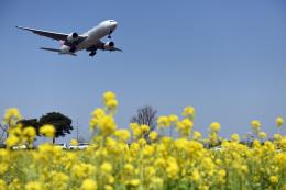 なないろさんが、福岡空港で撮影した日本航空 777-289の航空フォト(飛行機 写真・画像)