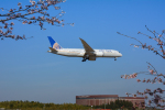 パンダさんが、成田国際空港で撮影したユナイテッド航空 787-8 Dreamlinerの航空フォト(写真)