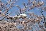 hkg blue skyさんが、成田国際空港で撮影した全日空 787-8 Dreamlinerの航空フォト(飛行機 写真・画像)
