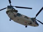 mumbo29さんが、名古屋飛行場で撮影した航空自衛隊 CH-47J/LRの航空フォト(写真)