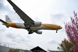 tsubasa0624さんが、成田国際空港で撮影したスクート (〜2017) 777-212/ERの航空フォト(飛行機 写真・画像)