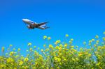 パンダさんが、成田国際空港で撮影したANAウイングス 737-54Kの航空フォト(写真)