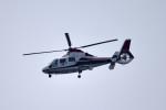 tsubasa0624さんが、羽田空港で撮影した読売新聞 AS365N2 Dauphin 2の航空フォト(写真)