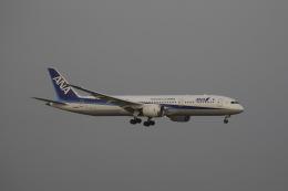 chalk2さんが、羽田空港で撮影した全日空 787-9の航空フォト(写真)