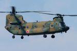 うめやしきさんが、厚木飛行場で撮影した陸上自衛隊 CH-47JAの航空フォト(飛行機 写真・画像)