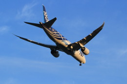 ギ―ピロさんが、羽田空港で撮影した全日空 787-8 Dreamlinerの航空フォト(飛行機 写真・画像)