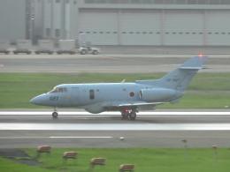 わたくんさんが、福岡空港で撮影した航空自衛隊 U-125A(Hawker 800)の航空フォト(飛行機 写真・画像)