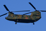 Scotchさんが、岐阜基地で撮影した陸上自衛隊 CH-47JAの航空フォト(写真)