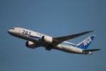ちょっぱさんが、羽田空港で撮影した全日空 787-8 Dreamlinerの航空フォト(写真)