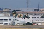 T.Sazenさんが、名古屋飛行場で撮影した航空自衛隊 CH-47J/LRの航空フォト(飛行機 写真・画像)