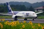うらしまさんが、高松空港で撮影した全日空 787-8 Dreamlinerの航空フォト(写真)
