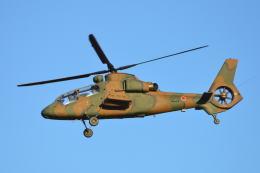 350JMさんが、入間飛行場で撮影した陸上自衛隊 OH-1の航空フォト(飛行機 写真・画像)