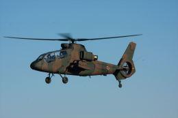 かいばらさんが、入間飛行場で撮影した陸上自衛隊 OH-1の航空フォト(飛行機 写真・画像)
