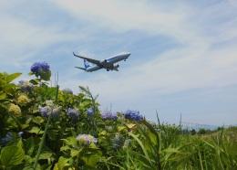 KCZfunさんが、高知空港で撮影した全日空 737-881の航空フォト(飛行機 写真・画像)