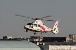 あきらっすさんが、調布飛行場で撮影した東邦航空 AS365N2 Dauphin 2の航空フォト(写真)