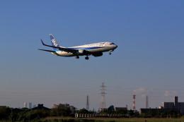 hiro727さんが、伊丹空港で撮影した全日空 737-881の航空フォト(飛行機 写真・画像)