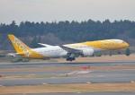 じーく。さんが、成田国際空港で撮影したスクート (〜2017) 787-9の航空フォト(飛行機 写真・画像)