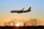 パンダさんが、成田国際空港で撮影した春秋航空日本 737-81Dの航空フォト(写真)