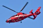 パンダさんが、東京ヘリポートで撮影した東京消防庁航空隊 AS365N3 Dauphin 2の航空フォト(写真)