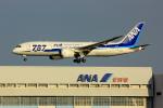 げんこつさんが、羽田空港で撮影した全日空 787-8 Dreamlinerの航空フォト(写真)
