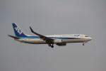 ヴェイパーさんが、成田国際空港で撮影した全日空 737-881の航空フォト(写真)