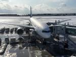 tsubasa0624さんが、函館空港で撮影した全日空 777-281の航空フォト(飛行機 写真・画像)