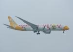 じーく。さんが、台湾桃園国際空港で撮影したスクート (〜2017) 787-9の航空フォト(飛行機 写真・画像)