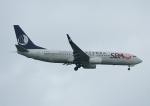 じーく。さんが、台湾桃園国際空港で撮影した山東航空 737-85Nの航空フォト(飛行機 写真・画像)