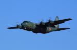 T.Sazenさんが、名古屋飛行場で撮影した航空自衛隊 C-130H Herculesの航空フォト(写真)