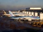 Koba UNITED®さんが、マンチェスター空港で撮影したトムソン航空 787-8 Dreamlinerの航空フォト(写真)