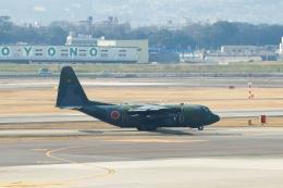 小鉢さんが、伊丹空港で撮影した航空自衛隊 C-130H Herculesの航空フォト(飛行機 写真・画像)