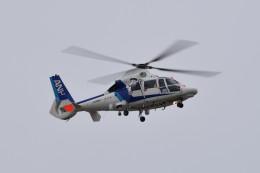 tsubasa0624さんが、名古屋飛行場で撮影したオールニッポンヘリコプター AS365N3 Dauphin 2の航空フォト(飛行機 写真・画像)