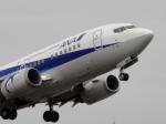 てくてぃーさんが、松山空港で撮影したANAウイングス 737-5L9の航空フォト(写真)
