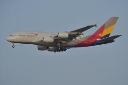 Korean Air KEさんが、仁川国際空港で撮影したアシアナ航空 A380-841の航空フォト(飛行機 写真・画像)